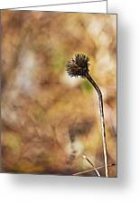 Fall Flower Greeting Card