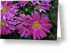 Fall Flowers In Bloom Greeting Card