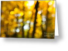 Fall Forest In Sunshine Greeting Card