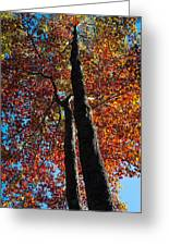 Fall From Above Greeting Card