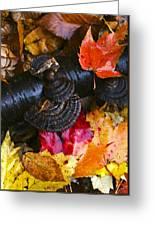 Fall Fungi Greeting Card