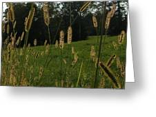Fall Grasses Greeting Card