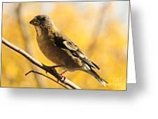 Fall Grosbeak Greeting Card