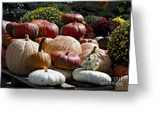 Fall Harvest Colorful Gourds 7965 Greeting Card