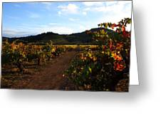Fall In A Sonoma Vineyard Greeting Card