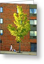 Fall In Rochester Greeting Card
