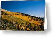 fall in Ruidoso Greeting Card