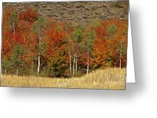 Fall In Snake River Canyon Greeting Card