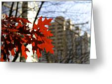 Fall In The City 2 Greeting Card