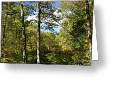 Fall In The Forest Greeting Card