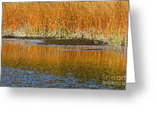 Fall In Yellowstone National Park Greeting Card