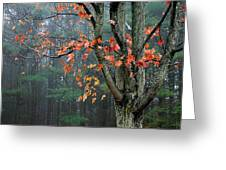 Fall In Your Face Greeting Card