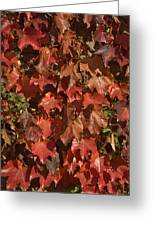 Fall Ivy On An Old Wall Greeting Card