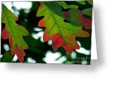 Fall L Eaves Greeting Card