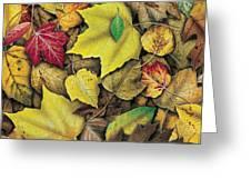 Fall Leaf Study Greeting Card by JQ Licensing
