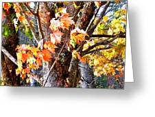 Fall Leaves 2 Greeting Card