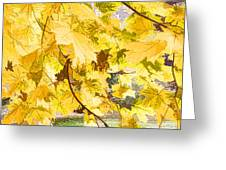 Fall Leaves Abstract Greeting Card