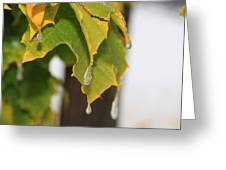 Fall Leaves And Icicles Greeting Card by Cynthia  Cox Cottam