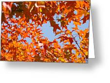 Fall Leaves Art Prints Autumn Red Orange Leaves Blue Sky Greeting Card