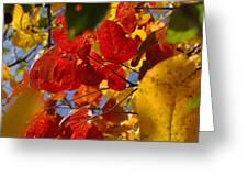 Fall Leaves Flp Greeting Card