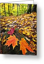 Fall Leaves In Forest Greeting Card by Elena Elisseeva