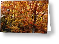 Fall Leaves On Trees Greeting Card