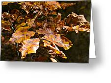 Fall Leaves Part Five Greeting Card