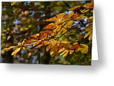Fall Leaves Part One Greeting Card