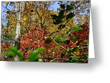 Fall Leaves Part Two Greeting Card