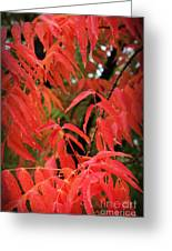 Fall Leaves Red 5 Greeting Card