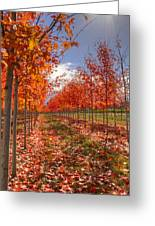 Fall Line Up Greeting Card