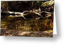 Fall Log Reflection Greeting Card