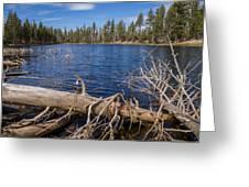 Fall Logs On Reflection Lake Greeting Card