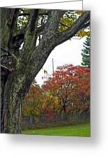 Fall Maple Greeting Card