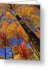 Fall Maple Trees Greeting Card by Elena Elisseeva