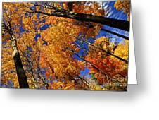 Fall Maple Treetops Greeting Card by Elena Elisseeva