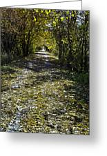 Fall On Macomb Orchard Trail Greeting Card