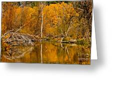 Fall On Taylor Creek Greeting Card