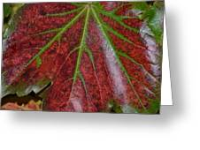 Fall On The Vine Greeting Card
