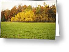Fall Poplars Greeting Card