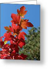Fall Snowball Branch Greeting Card