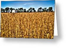 Fall Soy Field Greeting Card by Dan Crosby