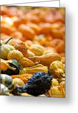 Fall Squash Variety Greeting Card