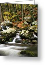 Fall Stream Greeting Card