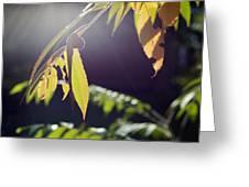 Fall Sumac Greeting Card