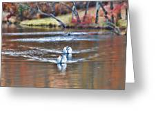 Fall Swans Greeting Card