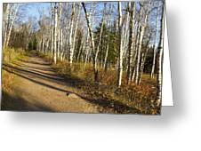 Fall Trail Scene 35 A Greeting Card