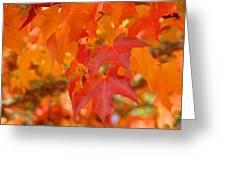 Fall Tree Leaves Art Prints Orange Red Autumn Greeting Card
