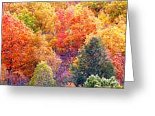 Fall Trees 3 Greeting Card