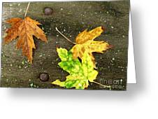 Fall Trio Greeting Card